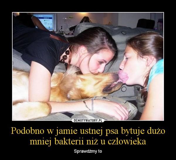 Podobno w jamie ustnej psa bytuje dużo mniej bakterii niż u człowieka – Sprawdźmy to