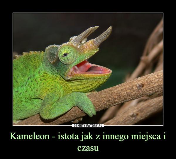 Kameleon - istota jak z innego miejsca i czasu –