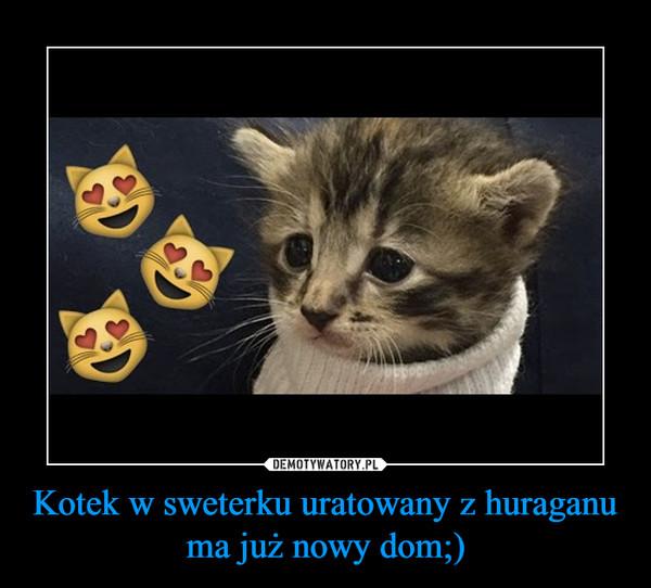Kotek w sweterku uratowany z huraganu ma już nowy dom;) –