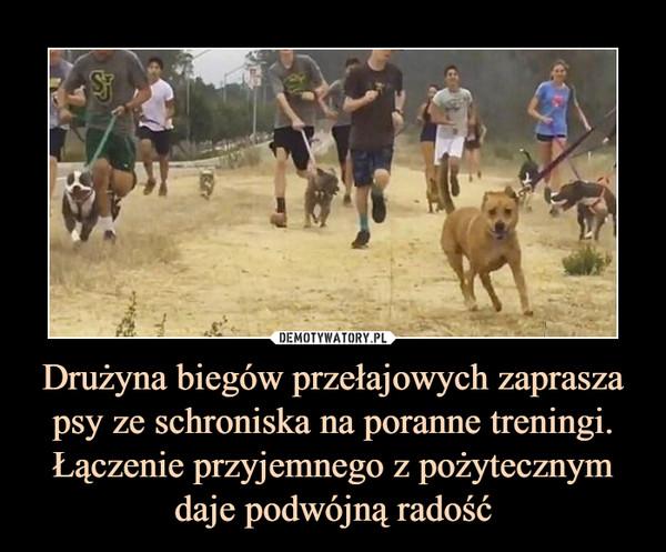 Drużyna biegów przełajowych zaprasza psy ze schroniska na poranne treningi. Łączenie przyjemnego z pożytecznym daje podwójną radość –