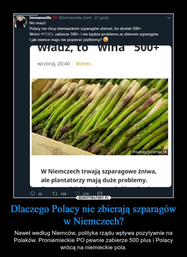 Dlaczego Polacy nie zbierają szparagów w Niemczech? – Nawet według Niemców, polityka rządu wpływa pozytywnie na Polaków. Proniemieckie PO pewnie zabierze 500 plus i Polacy wrócą na niemieckie pola.